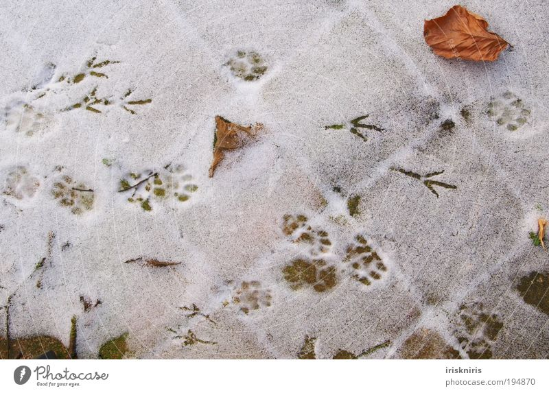 Winter Calm Leaf Cold Snow Cat Line Bird Walking Tracks Natural Square Footprint Terrace Paw Claw