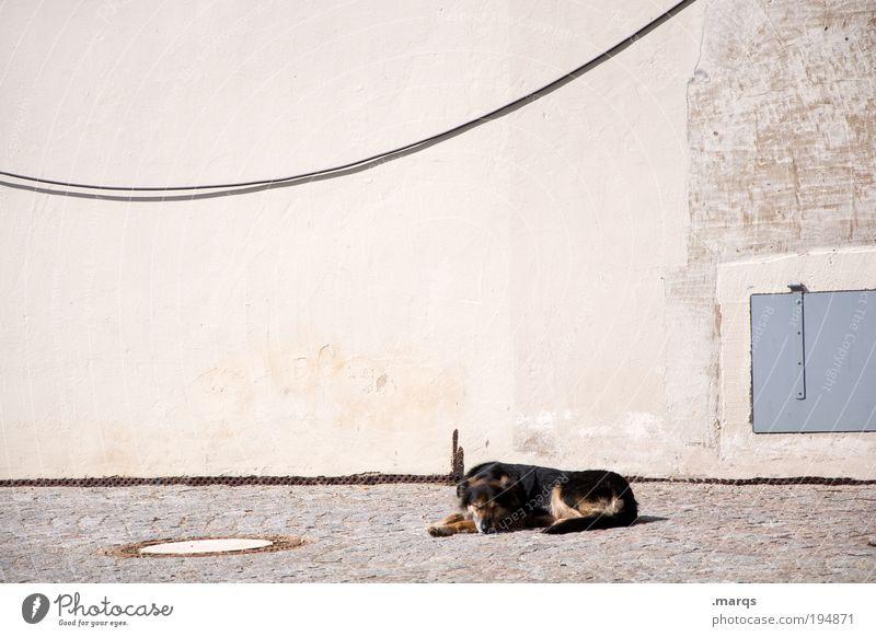 A dog's life Leisure and hobbies Summer Sun Sunbathing Wall (barrier) Wall (building) Facade Dog 1 Animal To enjoy Lie Sleep Positive Safety (feeling of)