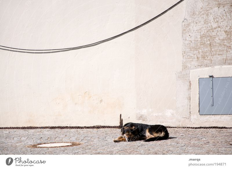 Sun Summer Vacation & Travel Loneliness Animal Relaxation Wall (building) Dog Wall (barrier) Contentment Facade Sleep Break Peace Lie Leisure and hobbies