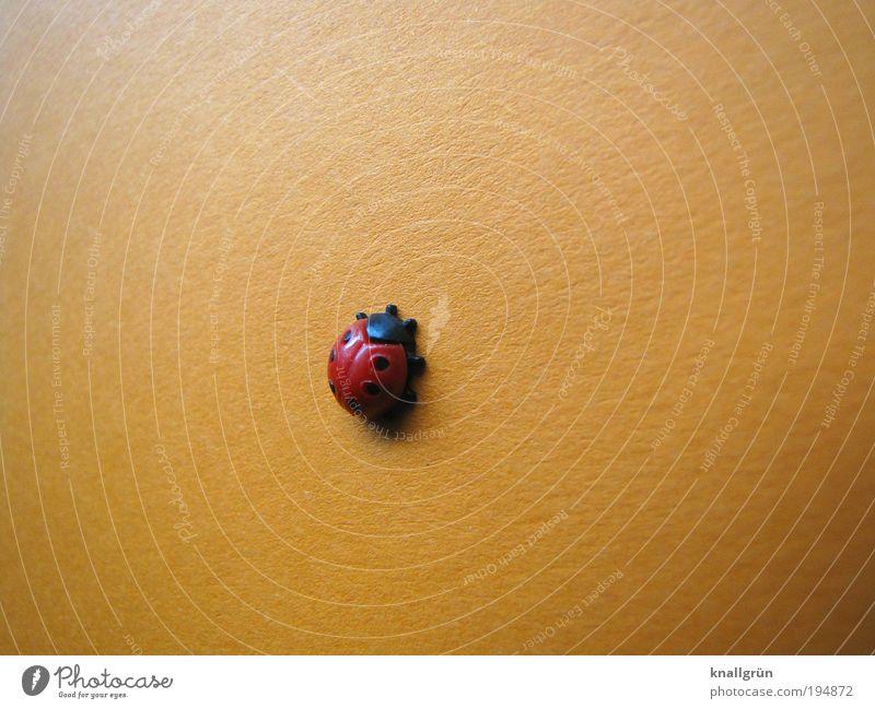 Beautiful Red Black Animal Happy Round Climbing Upward Ladybird Beetle