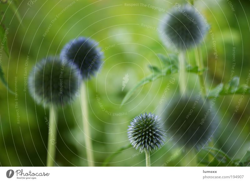 planet of the bees Environment Nature Plant Earth Spring Summer Flower Grass Leaf Blossom Foliage plant Blue Green Violet Spring fever Colour photo