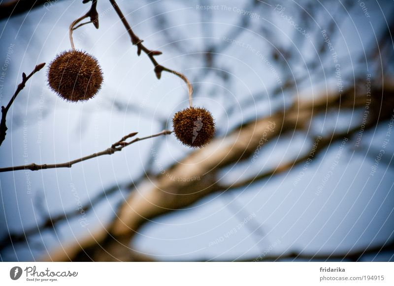 tree ornaments Elements Air Sky Spring Beautiful weather Tree Branch Bud Sphere Select Touch Movement Rotate Catch Hang To swing Carrying Dream Faded Esthetic