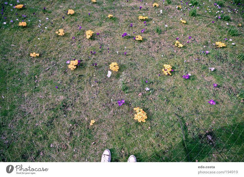 |Spring|#1| Environment Nature Elements Earth Flower Grass Garden To enjoy Green Spring fever Perturbed Senses Colour photo Exterior shot Deserted Morning