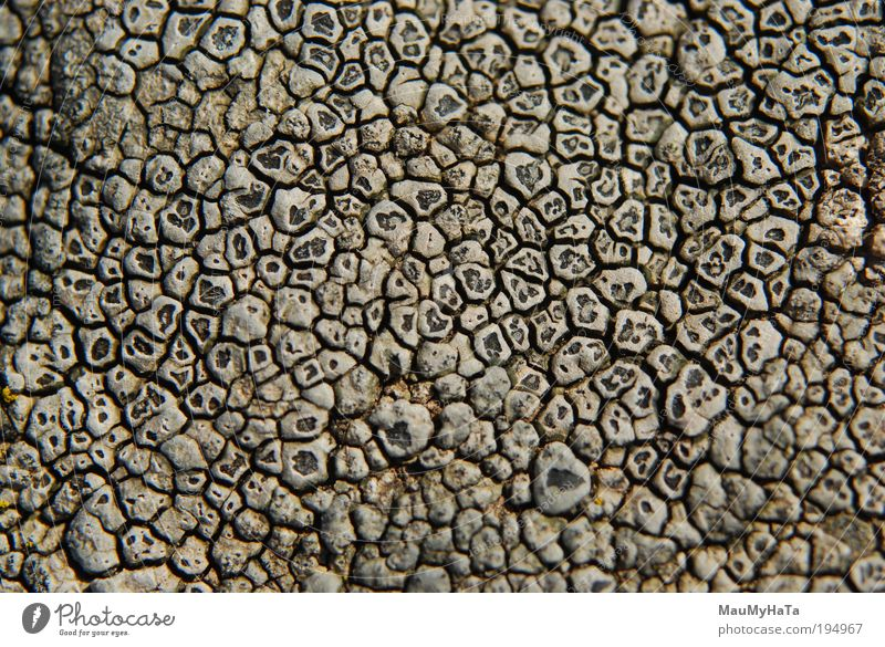 Lichen Nature Beautiful Old Sun Black Dark Style Mountain Gray Stone Small Design Macro (Extreme close-up) Elegant Free Rock