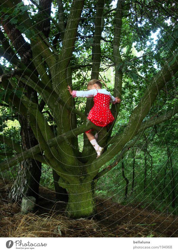Human being Child Tree Girl Joy Life Happy Moody Infancy Power Success Happiness Climbing Trust Joie de vivre (Vitality) Tree trunk