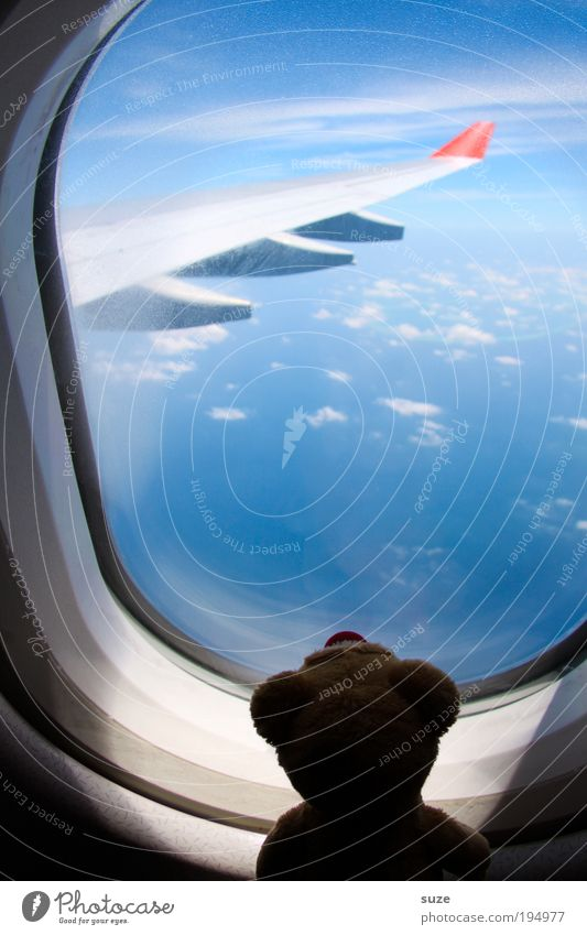 Sky Vacation & Travel Clouds Window Freedom Funny Air Dream Friendship Horizon Flying Airplane Travel photography Aviation Cute