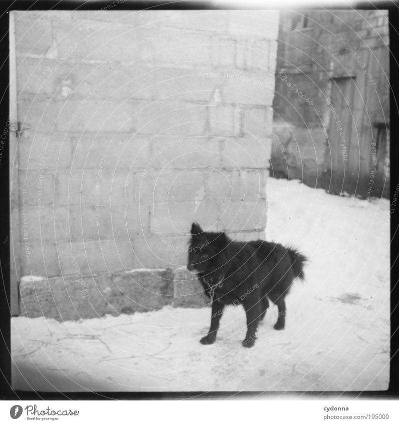 Dog Old Winter Calm Life Wall (building) Freedom Wall (barrier) Time Safety Change Threat Protection Trust Idea Historic