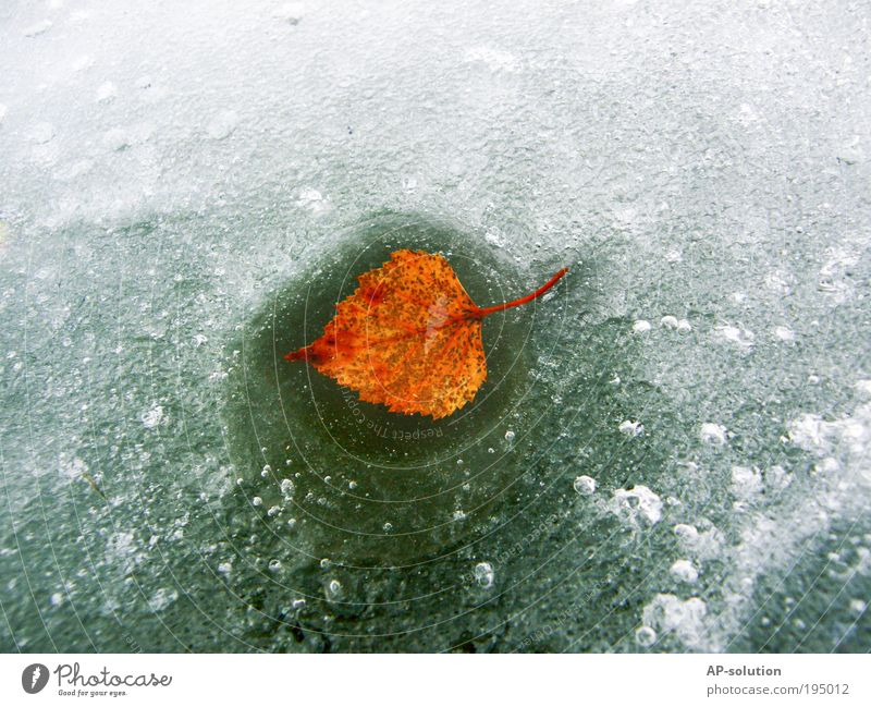 Nature Water White Green Plant Winter Leaf Calm Yellow Environment Autumn Cold Lake Ice Power Natural