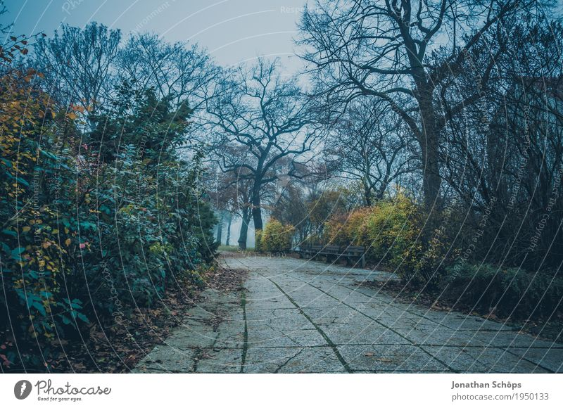 Nature Plant Blue Tree Landscape Loneliness Winter Environment Cold Sadness Autumn Lanes & trails Death Park Fog Gloomy