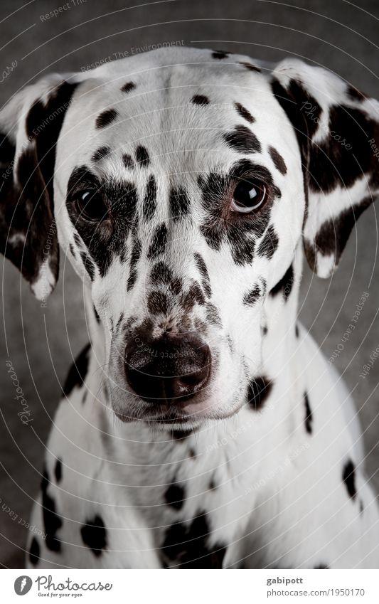Sweet - he dog look :-) Animal Pet Farm animal Dog 1 Friendliness Glittering Curiosity Soft Black White Puppydog eyes Cute Beg Innocent Love of animals
