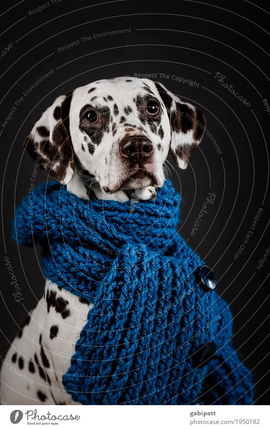 Dog Blue Beautiful White Animal Black Healthy Health care Illness Common cold Pain Pet Alternative medicine Exhaustion Cuddly Sympathy