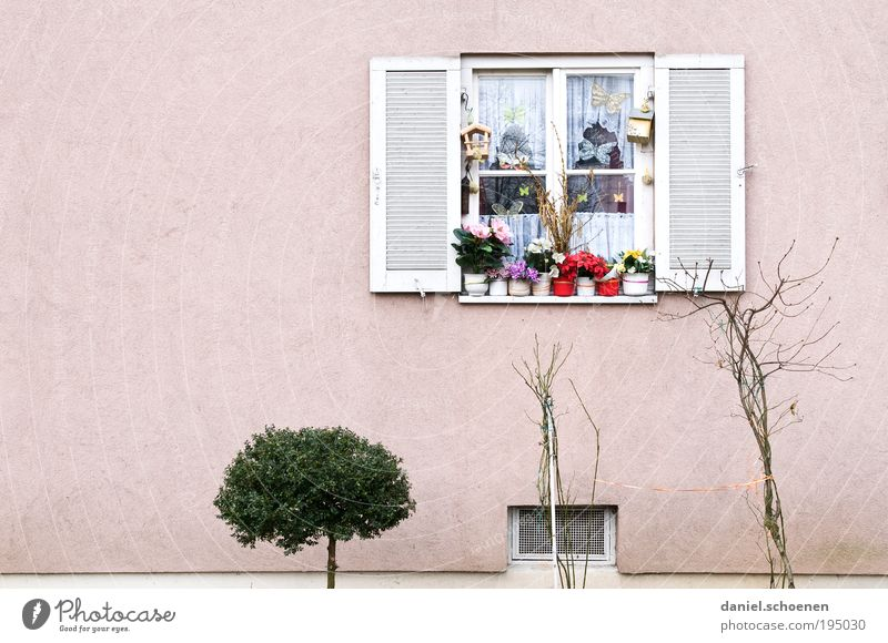 White Plant Flower Environment Window Wall (building) Wall (barrier) Weather Pink Facade Bushes Curtain Flowerpot Copy Space left