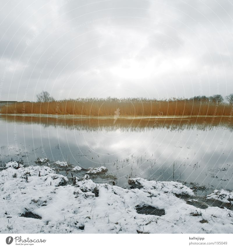 lake stage Environment Nature Landscape Plant Animal Earth Air Water Sky Clouds Sun Winter Ice Frost Snow Tree Grass Bushes Meadow Field Lakeside River bank