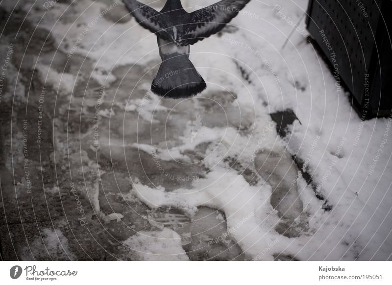 White Blue City Winter Black Loneliness Animal Cold Snow Emotions Air Power Bird Fear Going Flying