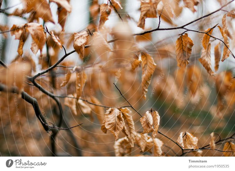 Autumn (2/2). Environment Nature Plant Winter Tree Beech tree Forest Esthetic Natural Dry Brown Black Transience Branch Leaf Autumn leaves Colour photo