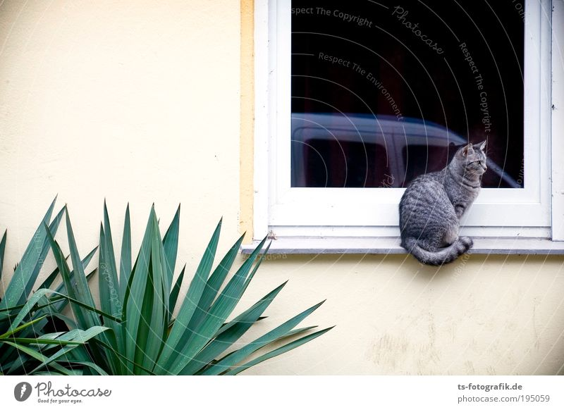Waiting for a friend Plant Cactus Foliage plant Pot plant Exotic Palm tree House (Residential Structure) Wall (barrier) Wall (building) Window Animal Pet Cat