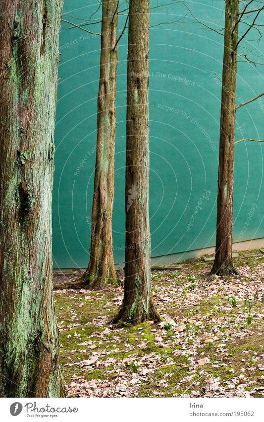 Favorite spot [BO] Environment Nature Plant Tree Moss Wild plant Exotic Bald-cypress Tree trunk taxodium Leaf Bochum Academic studies Wall (barrier)