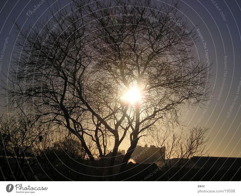 Shining sun Tree Sun Stairs Sky
