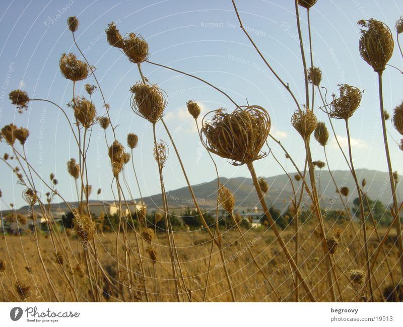Sky Summer Blossom Moody Field Coast Greece Across Kos