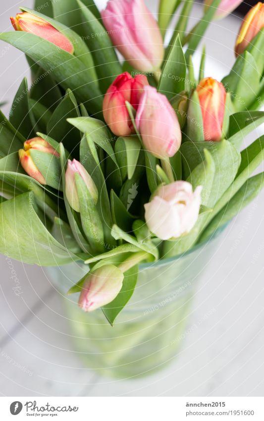 Tulip bouquet II Plant Bright Flower Bouquet Spring Friendliness Interior shot Gift Love Friendship Mother's Day Donate Pink Orange Red Green Nature Joy Wood