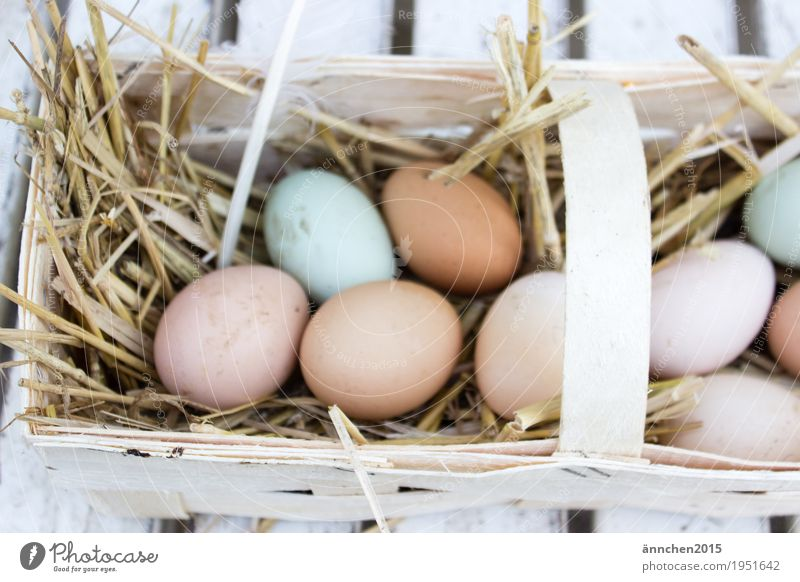 Healthy Eating Dish Eating Easter Search Organic produce Egg Find Barn fowl Basket Straw Country life Free-roaming Egg