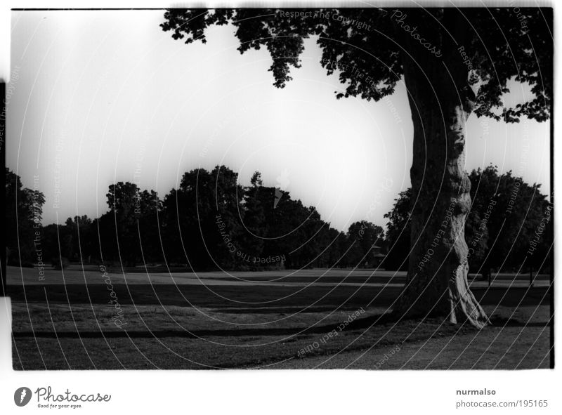 Nature Tree Joy Dark Dream Park Landscape Art Going Environment Trip Esthetic Growth Lawn Tourism Leisure and hobbies