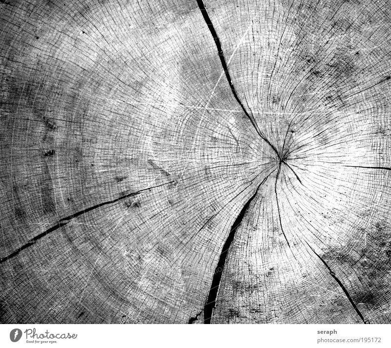 Time Wood wood drink Annual ring tree ring chopped down organic tree drink crust bark ring Firewood oval structure intersection surface Circle age-old