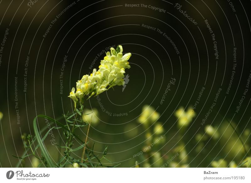 Nature Plant Yellow Environment Fragrance Beautiful weather Wild plant