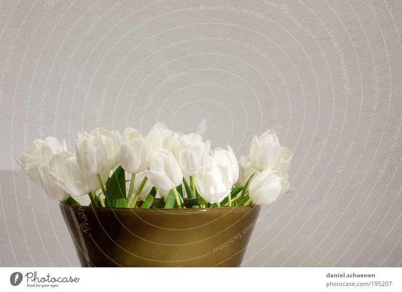 Spring 2 Plant Gray Green White Bouquet Flower vase Tulip Subdued colour