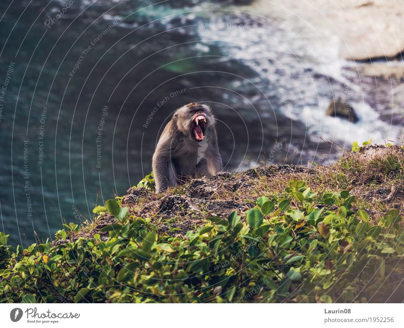 Angry Monkey Trip Adventure Far-off places Freedom Expedition Summer Ocean Island Waves Hiking Nature Landscape Water Beautiful weather Hill Rock Coast Bay Bali