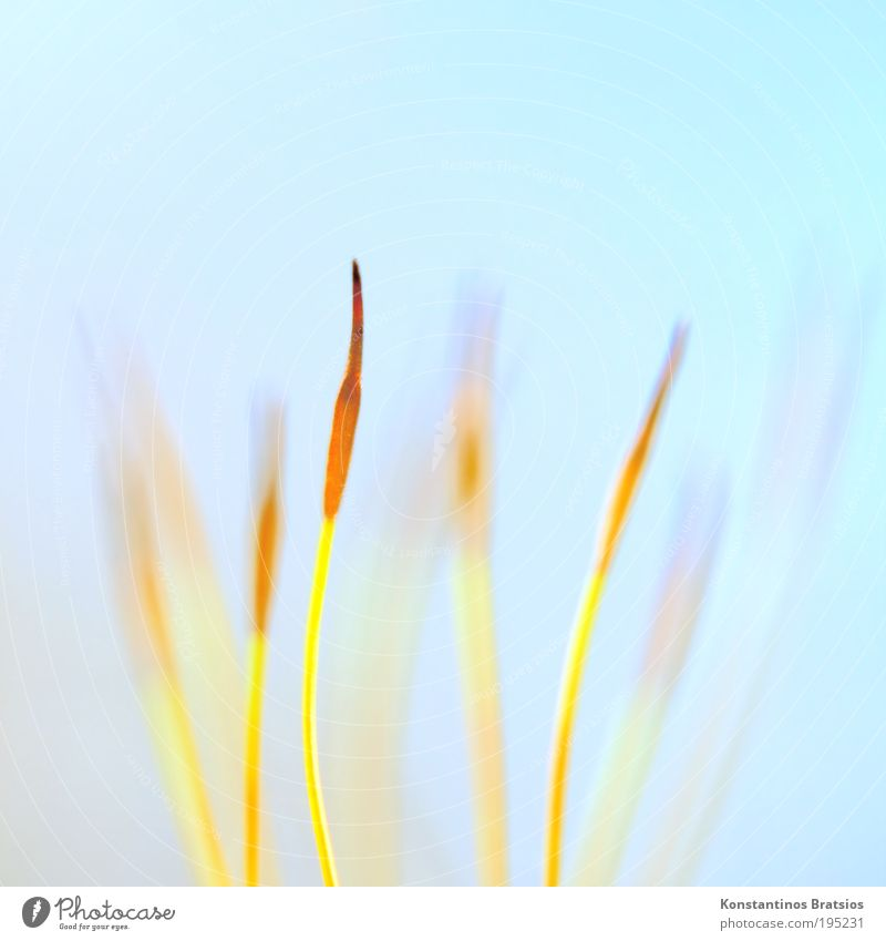 Nature Blue Beautiful Plant Yellow Small Spring Bright Orange Background picture Elegant Esthetic Growth Soft Point Thin
