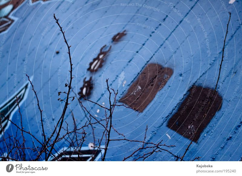urban art Art Work of art Graffiti Bushes Wild plant Wall (barrier) Wall (building) Concrete Animal Beetle 3 Esthetic Authentic Near Crazy Soft Blue Black Calm