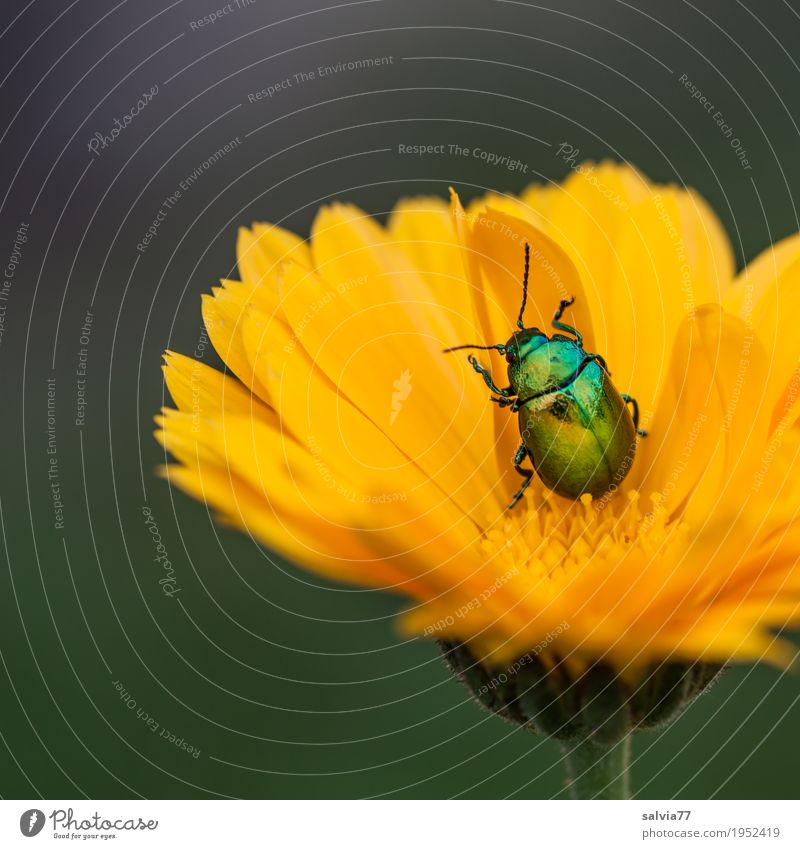 Nature Plant Summer Flower Leaf Animal Garden Contentment Blossoming Well-being Rotate Beetle Alternative medicine Crawl Agricultural crop Medicinal plant