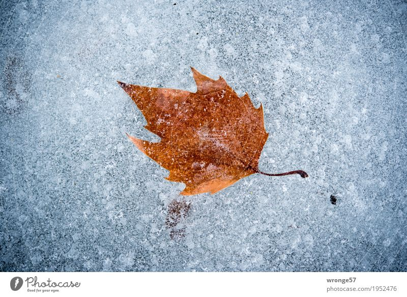 Nature White Leaf Winter Cold Gray Lake Brown Ice Frost Frozen Pond Landscape format Enclosed