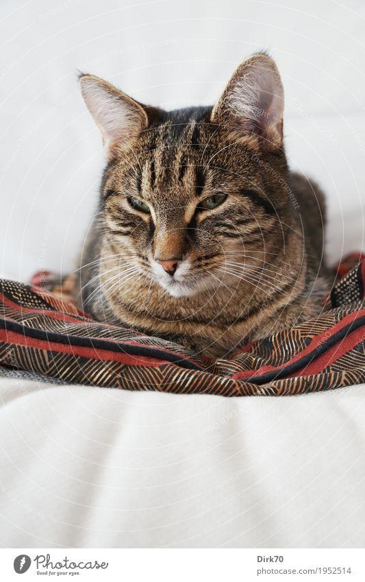 Sleepy on the armchair II - Awakened Lifestyle Living or residing Flat (apartment) Furniture Sofa Armchair Animal Pet Cat Animal face Domestic cat Tabby cat 1