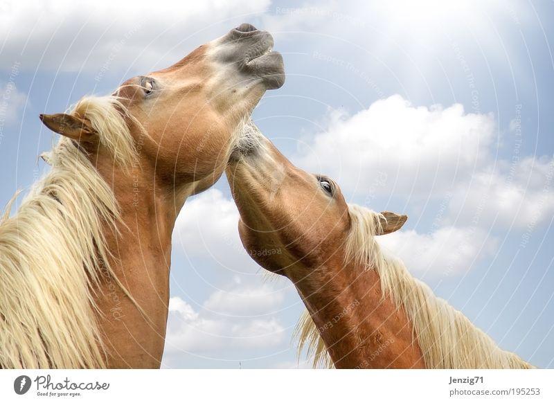 Blue Joy Animal Movement Happy Brown Contentment Pair of animals Free Happiness Cute Joie de vivre (Vitality) Infinity Horse Pelt Pet