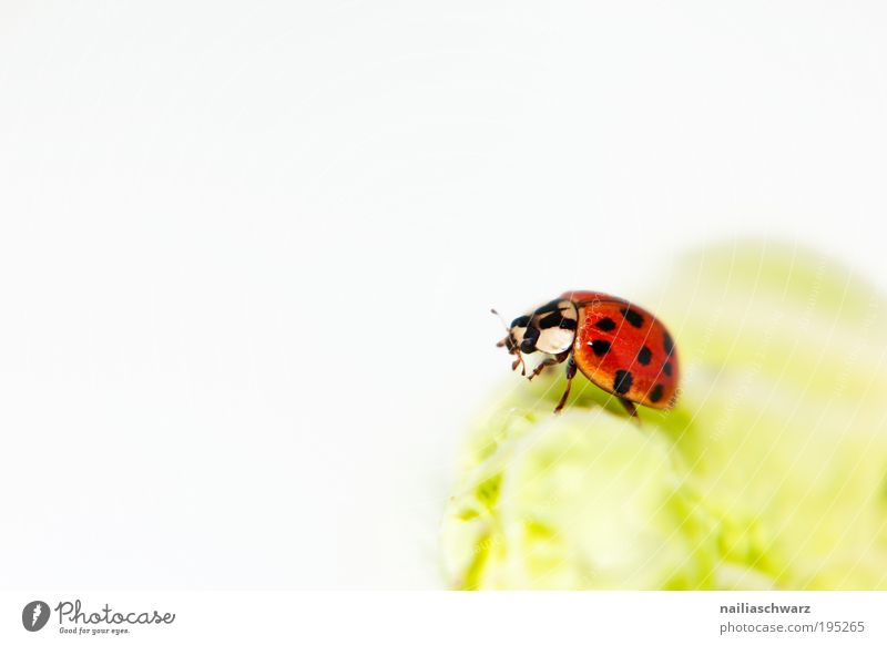 Nature Green Red Black Animal Happy Small Environment Esthetic Good Wild animal Beetle Light