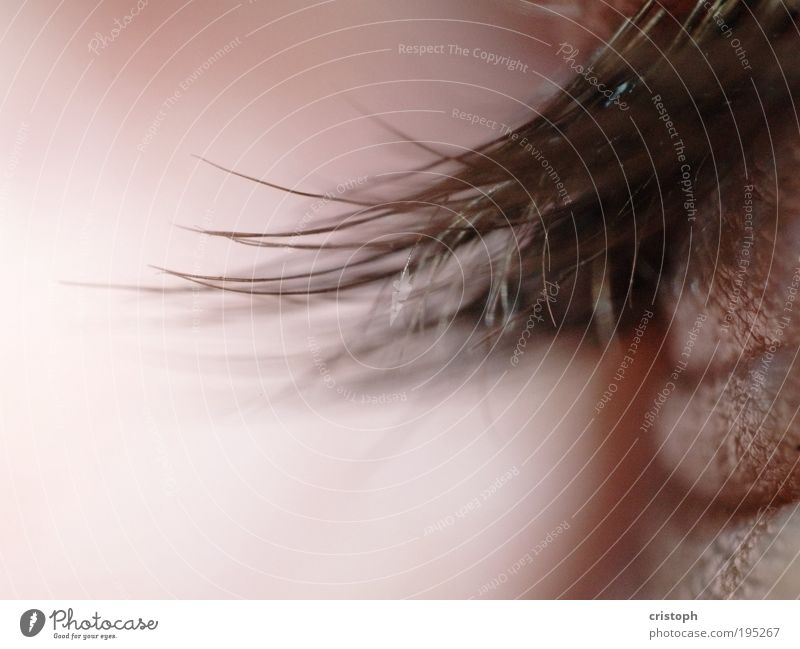 Beautiful Red Eyes Relaxation Hair and hairstyles Pink Eyelash Macro (Extreme close-up) Senses Human being Closed eyes Retroring