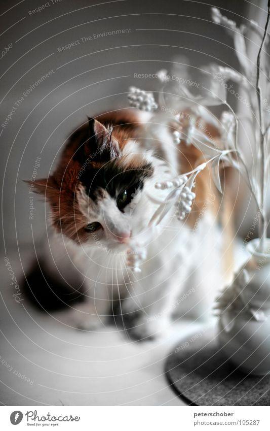Beautiful White Flower Red Calm Animal Cat Flat (apartment) Table Decoration Pelt Idyll Curiosity Fragrance Odor Senses