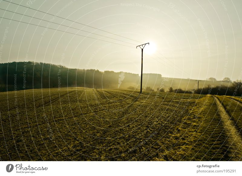 A new day Environment Nature Landscape Plant Sky Sun Sunlight Spring Beautiful weather Fog Tree Field Meadow Forest Happy Infinity Warmth Contentment