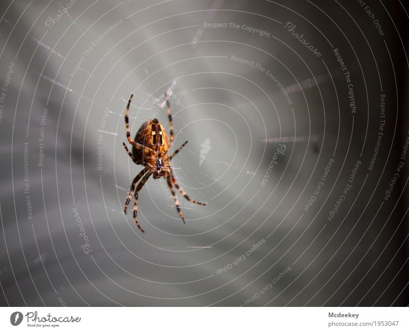 Going online Nature Animal Summer Farm animal Wild animal Spider Legs Parts of body Cross spider Spider's web Spider legs 1 Catch To hold on Crouch Hunting Wait