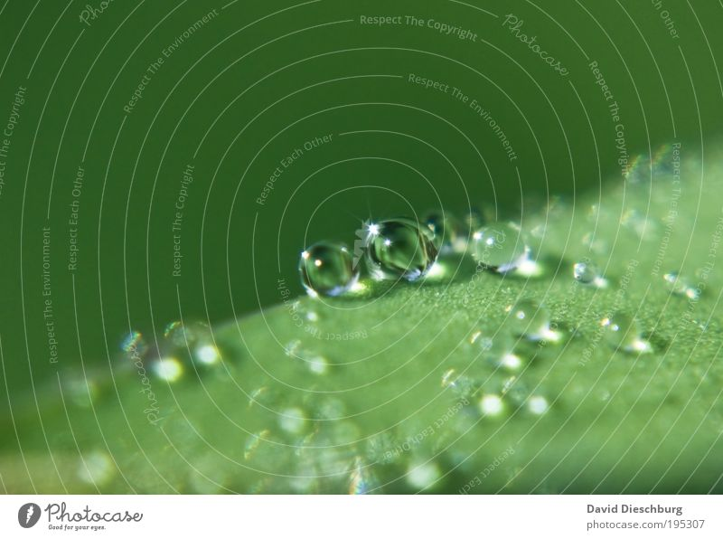 Nature Plant Green Summer Leaf Black Life Spring Rain Glittering Fresh Drops of water Wet Harmonious Sphere