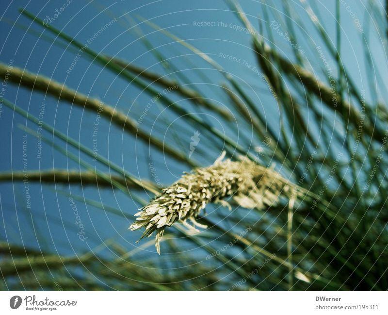 Beautiful Sky Green Blue Plant Summer Beach Vacation & Travel Calm Colour Meadow Emotions Blossom Grass Movement Dream
