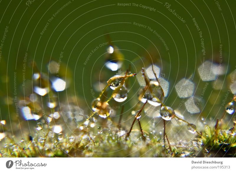 Nature White Green Summer Plant Life Grass Spring Rain Wet Drops of water Sphere Stalk Damp Dew