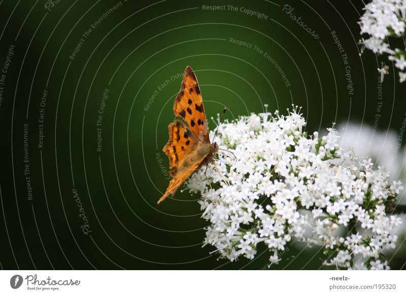 Nature Flower Green Plant Animal Meadow Blossom Spring Environment Esthetic Butterfly Curiosity Fragrance Spring fever