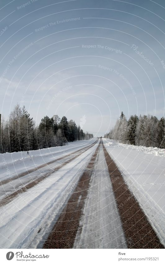 direction rovaniemi Vacation & Travel Tourism Trip Far-off places Freedom Winter Snow Winter vacation Environment Nature Landscape Sky Plant Tree Forest