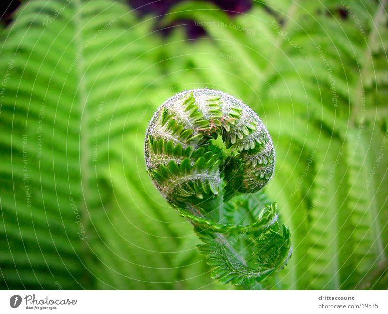 defusing Plant Green Park Pteridopsida Close-up Garden Botanical gardens