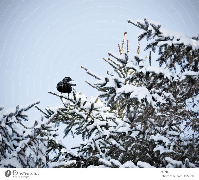 Nature Tree Plant Winter Animal Snow Landscape Bird Environment Wild animal Freeze Beautiful weather Crow