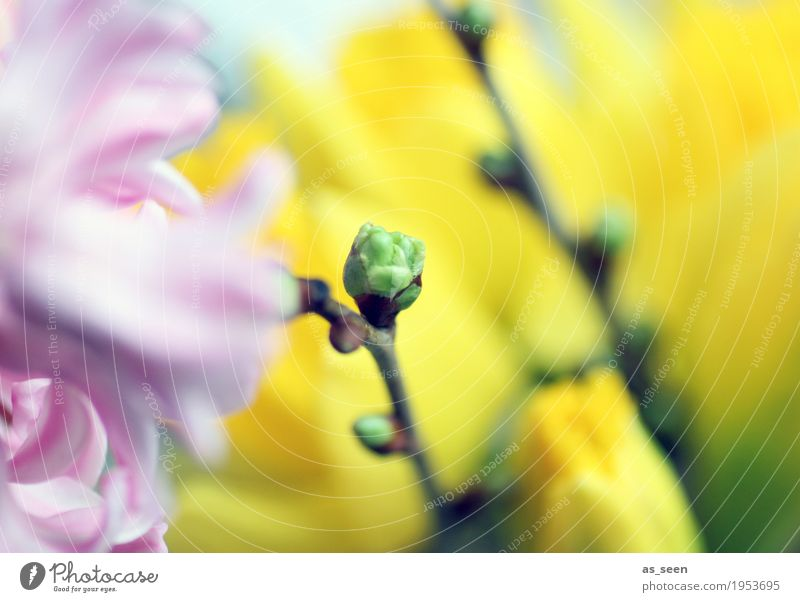Nature Plant Colour Green Flower Environment Yellow Life Lifestyle Spring Style Garden Pink Park Growth Decoration