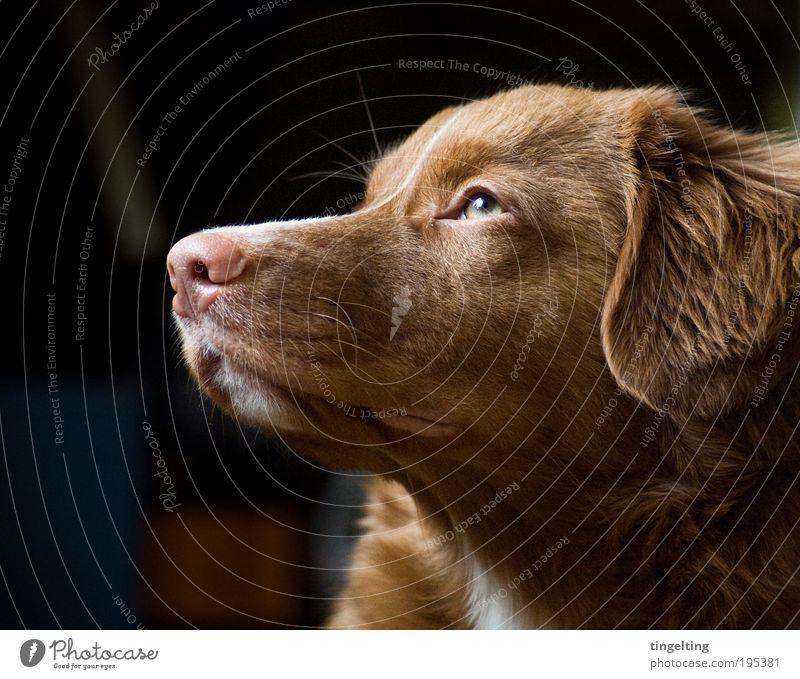 Dog Green Animal Black Eyes Warmth Happy Bright Brown Pink Nose Soft Pelt Friendliness To enjoy Pet